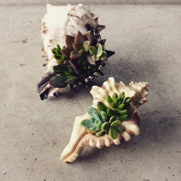 sea shell planter ideas to show off your plants ideas for displaying seahells balcony garden web. Black Bedroom Furniture Sets. Home Design Ideas