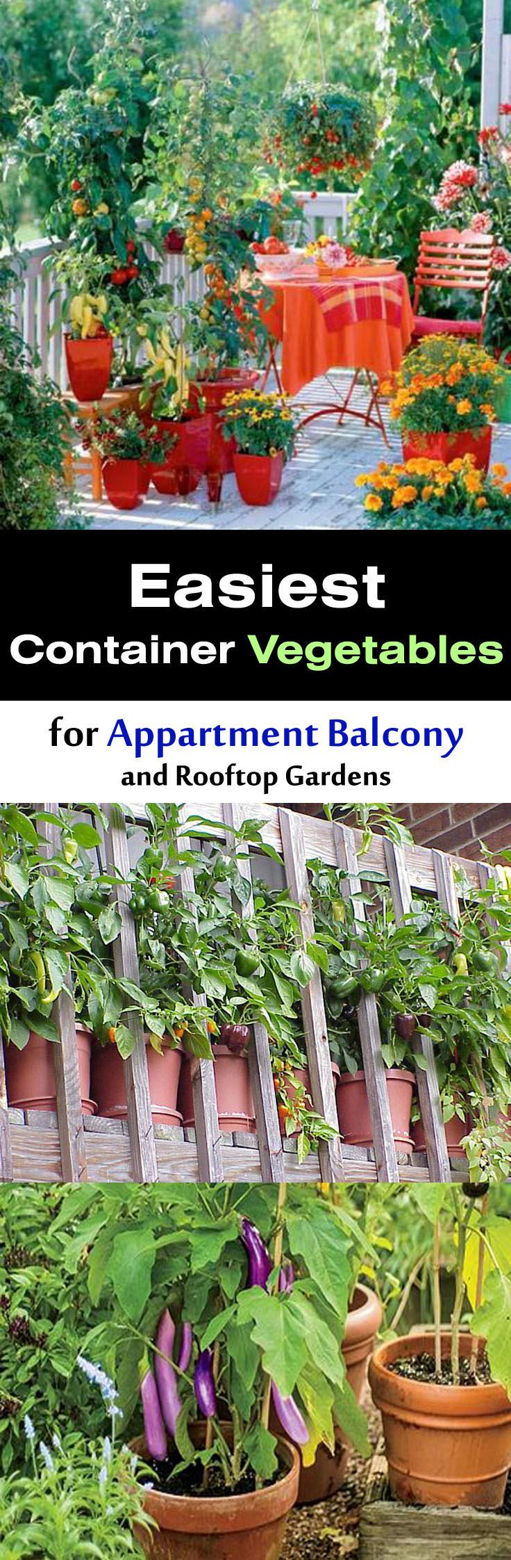 Rooftop Kitchen Garden Easy Container Vegetables For Balcony Rooftop Garden Container