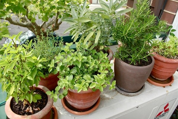 7 Apartment Herb Garden Tips | Apartment Gardening | Balcony Garden Web
