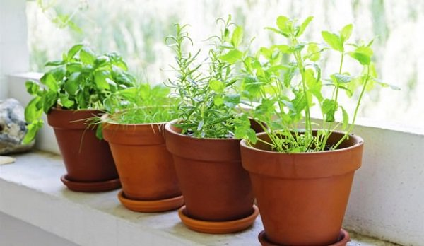 5 Provide Shade In The Hottest Months Herb Garden Set