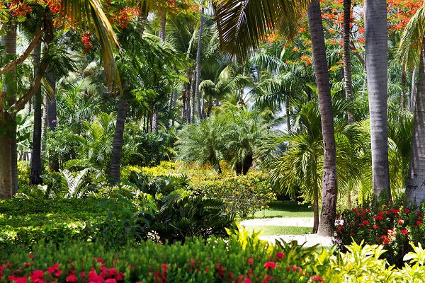 14 Cold Hardy Tropical Plants to Create a Tropical Garden in Cold