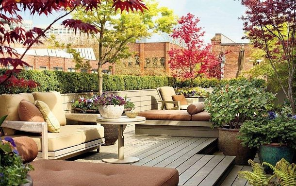 Maple Trees On This Rooftop Garden Are Looking Phenomenal
