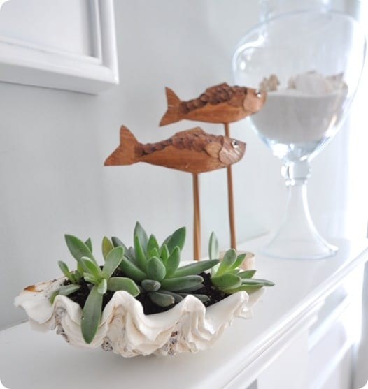 Sea Shell Planter Ideas To Show Off Your Plants Ideas