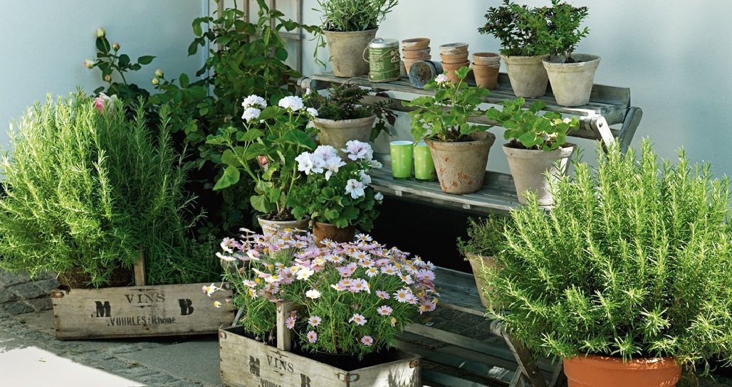 7 Apartment Herb Garden Tips Gardening Balcony Web