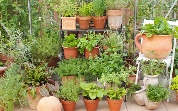 7 Apartment Herb Garden Tips | Apartment Gardening | Balcony ...