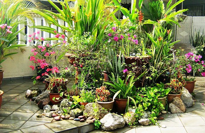 Container Garden Design karen manix Disguise Ugly Pots And Plant Stands By Placing Containers In Front Of Them This Will Also Create The Illusion That The Plants Are Larger Than They Actually
