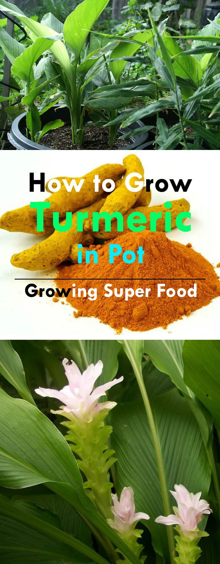 medicinal uses of turmeric root Turmeric is one on the five primary buddhist incense ingredients and also the traditional coloring for the  cosmetic uses : perfumery  medicinal attributes.