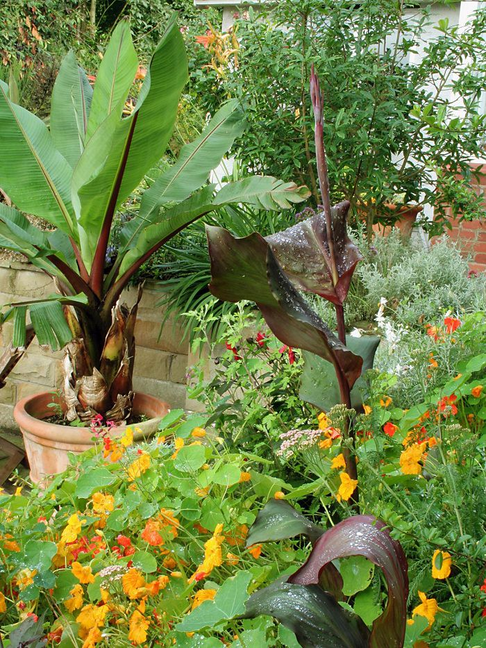 11 Most Essential Container Garden Design Tips Designing a