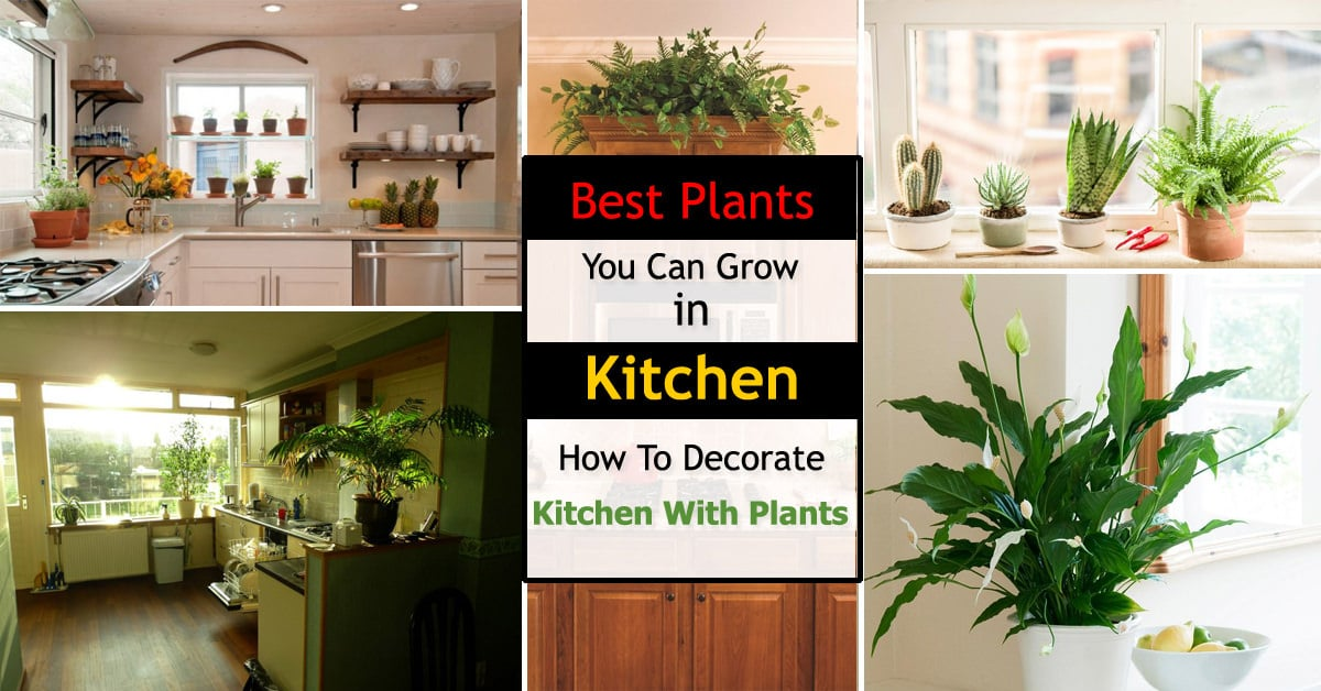 Best kitchen plants plants for kitchen to decorate it for How to decorate terrace with plants