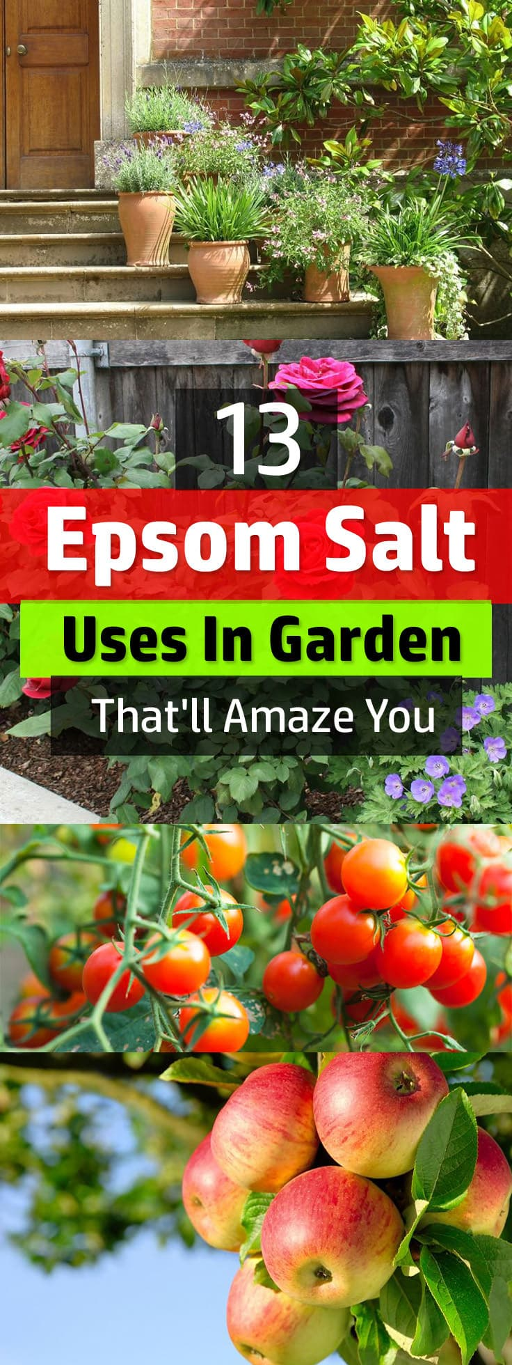 Those Who Use It Swear That Using Epsom Salt On Plants Make Them Lush And  Healthier