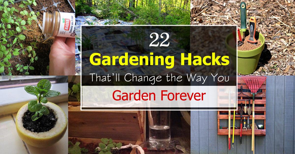 22 Gardening Hacks That Ll Change The Way You Garden