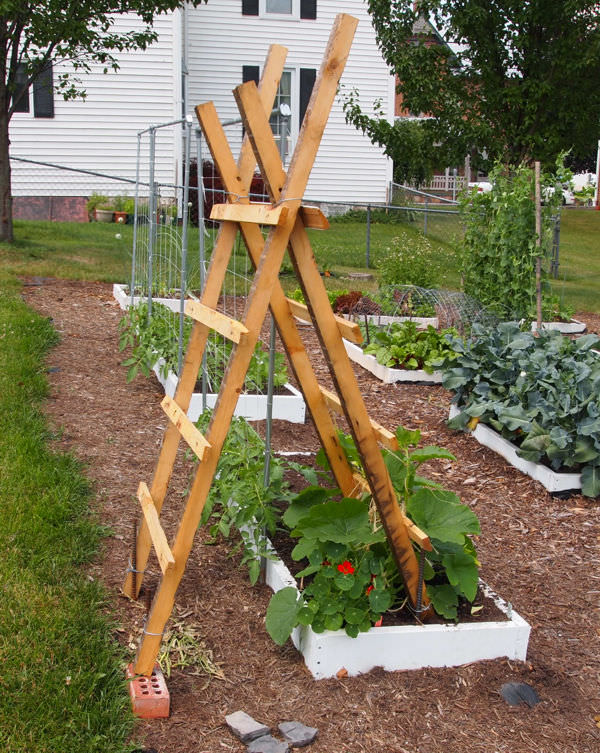 Trellis Gardening Ideas Part - 39: A No Work Trellis Idea To Create An Attractive Trellis. All You Need To Do  Is To Place An Old Ladder Near A Vine Or Climber And Train Your Plants On  It.