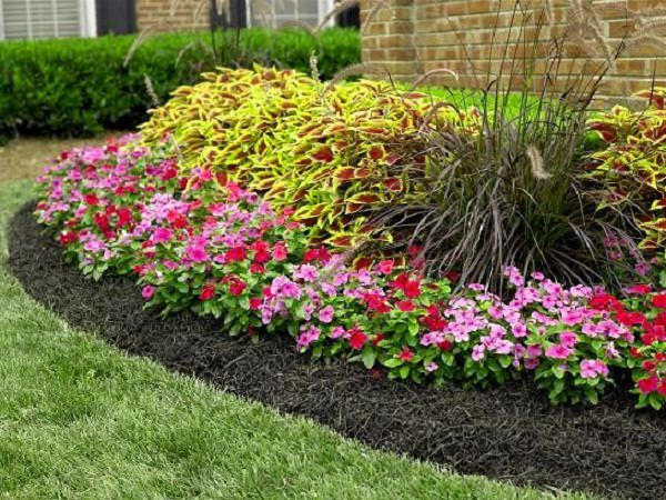Plants Growing In A Mulched Soil Are Usually More Vigorous, Less Prone To  Pests And Diseases.