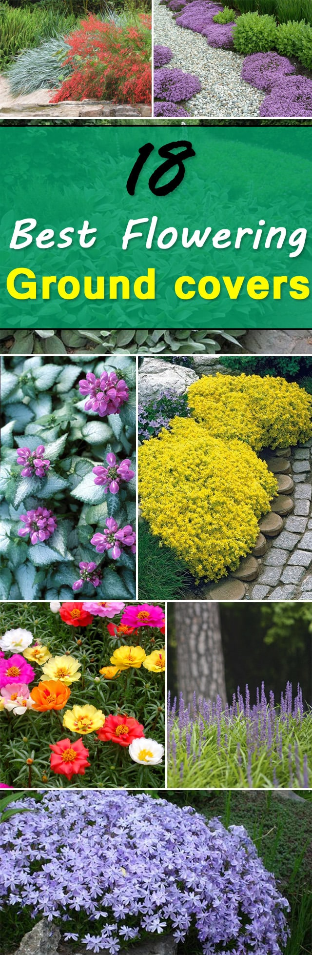 18 Best Flowering Ground Cover Plants Balcony Garden Web