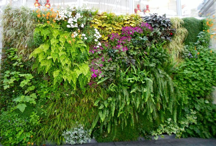 Best plants for vertical garden vertical garden plants for Plants for outdoor garden