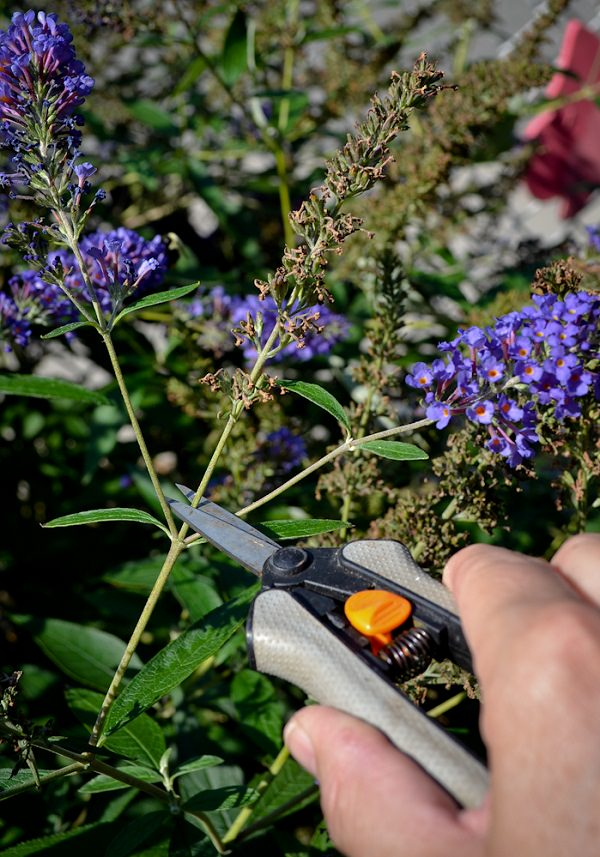 7 Secrets To Have More Blooms In The Garden Balcony Garden Web