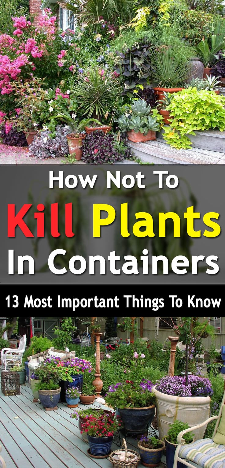 How Not To Kill Plants In Containers Pot