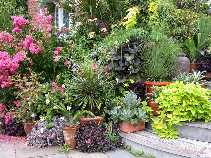 How Not To Kill Plants In Containers (2)