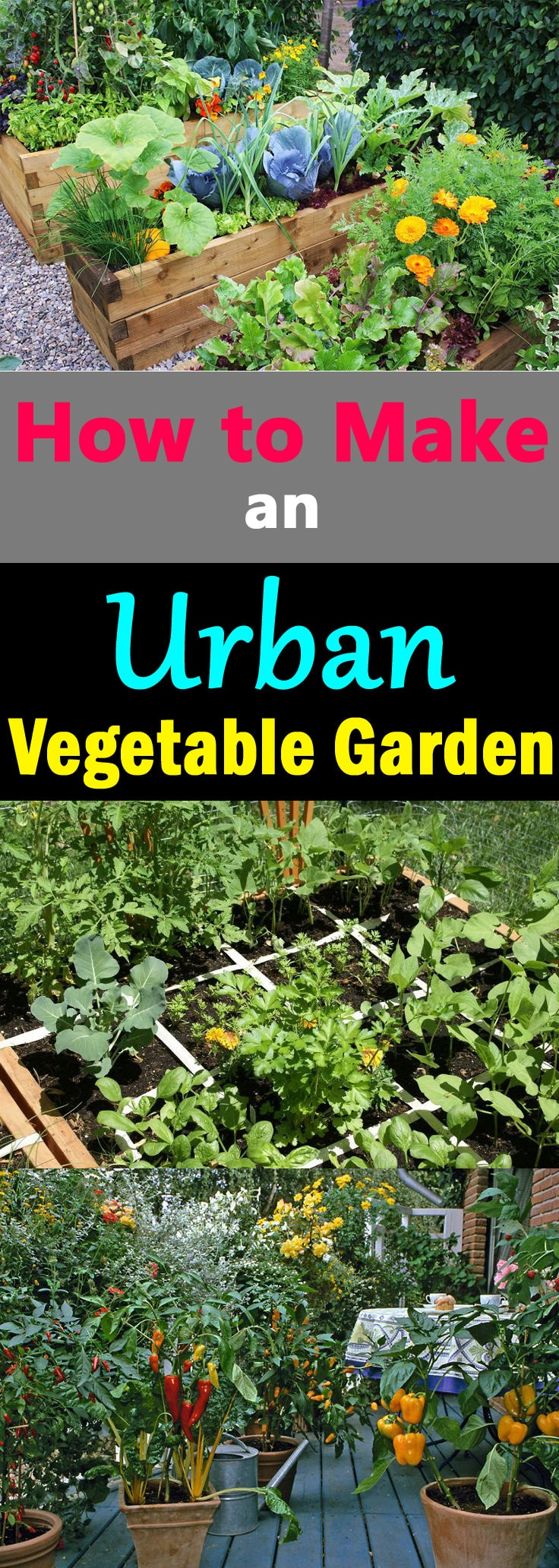 want to know how to make an urban vegetable garden this article will help you