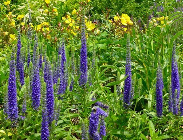 best flowering ground cover plants  balcony garden web, Natural flower