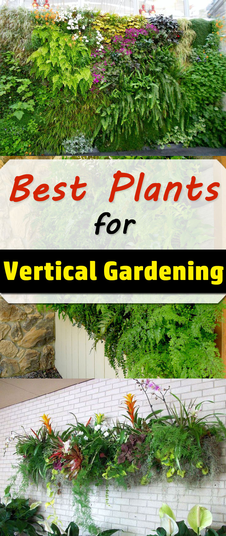 The Correct Selection Of Plants Plays An Important Role In The Design And  Functioning Of Vertical