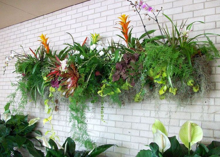 Most Bromeliads Have Shallow Roots And They Need Little Space To Grow This  Makes Them Ideal Plants For Vertical Gardens. Their Colorful Leaves And  Long ...