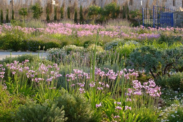 With Its Edible Garlic Flavored Purple Flowers And Clump Forming Gr Like Blue Grey Foliage This Tough Low Maintenance Ground Cover Is A