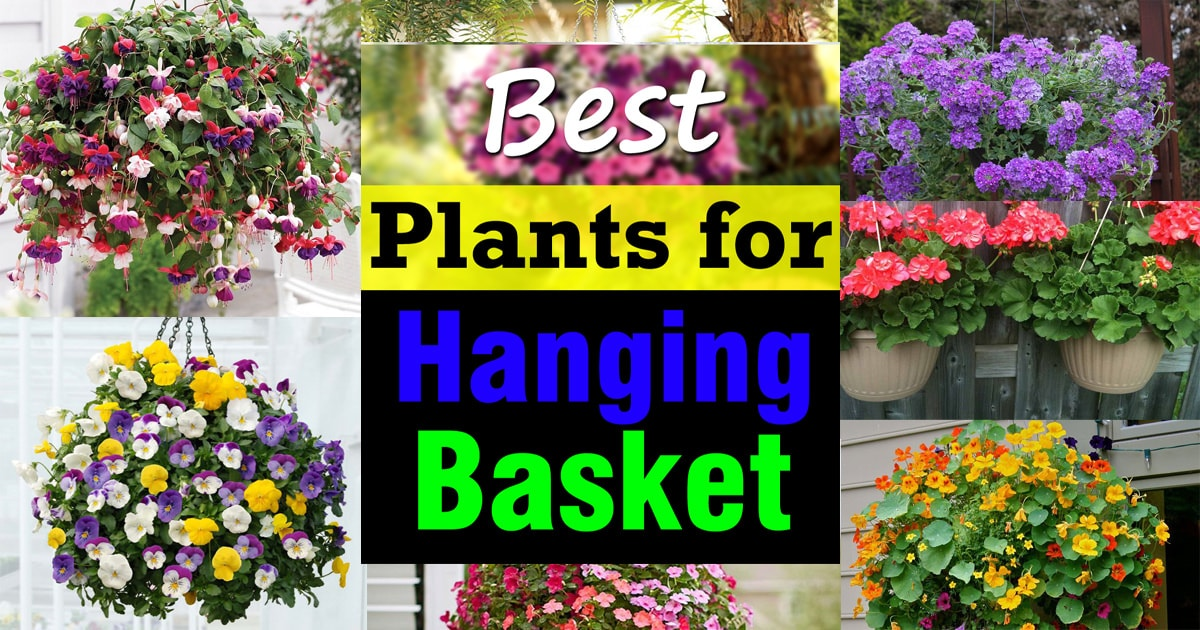 Best plants for hanging baskets balcony garden web for Best garden plants