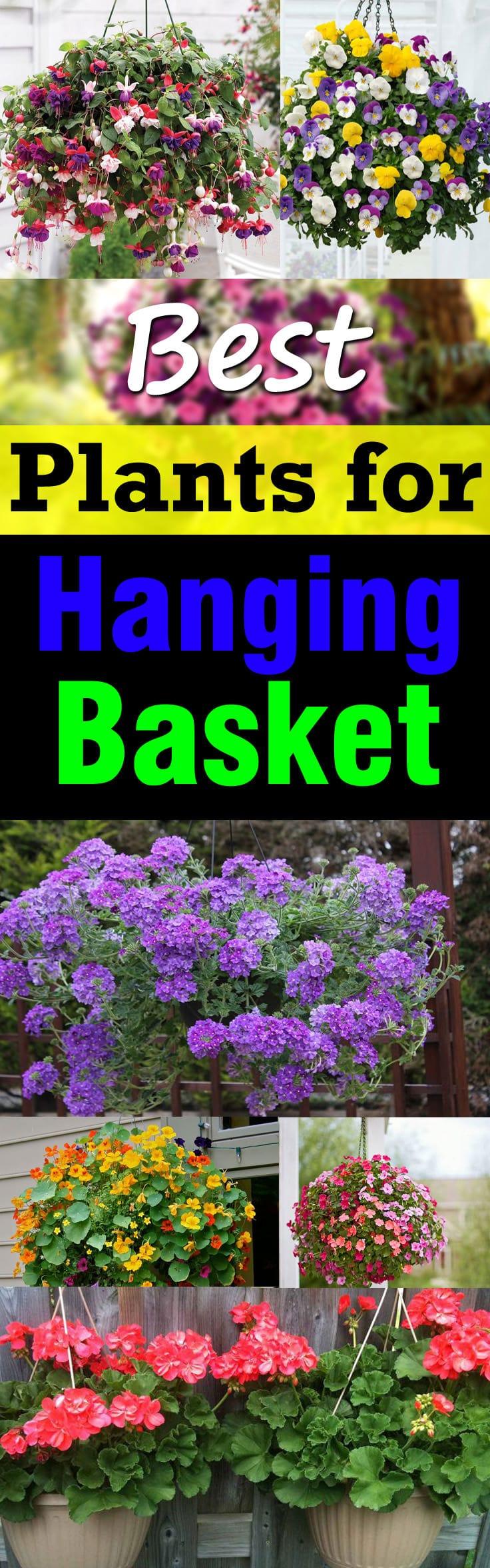 Best Plants For Hanging Baskets | Balcony Garden Web