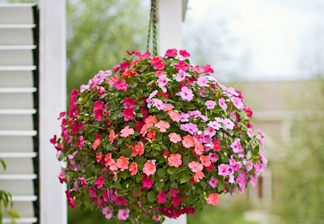 70 Hanging Flower Planter Ideas (PHOTOS and TOP 10)