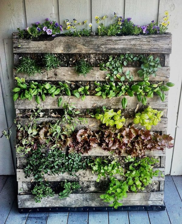 Vertical Pallet Planter. Balcony Vertical Garden