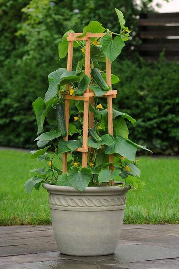 Support climbing ve ables and vines and direct them upward with the help of a trellis or a cage or by any other way Such plants use vertical space and