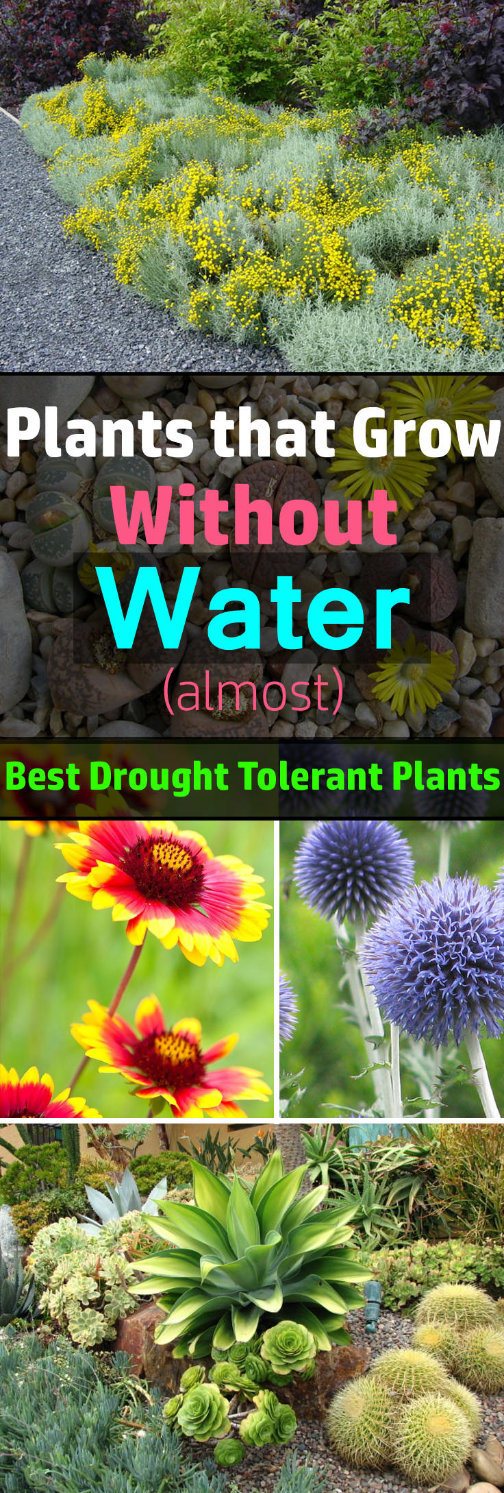 24 best drought tolerant plants that grow in lack of water for Landscaping without plants