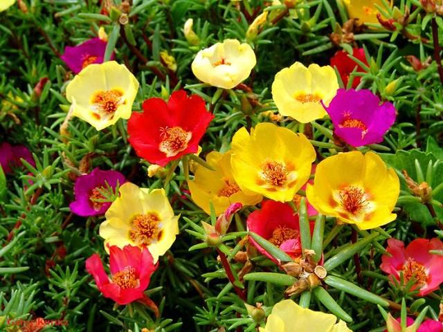 Piante Balcone Pieno Sole : Best drought tolerant plants that grow in lack of water