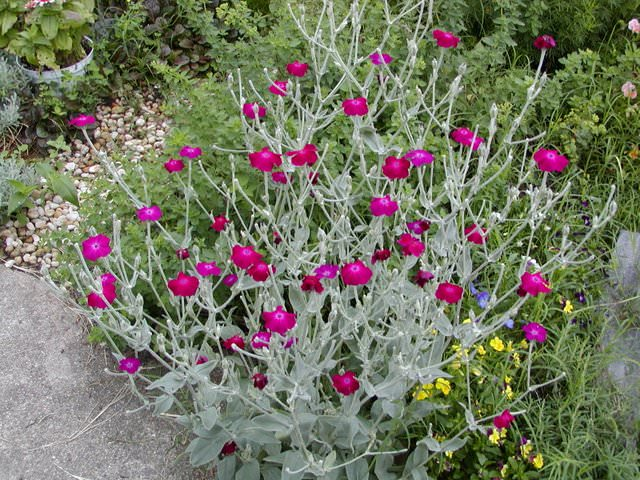 Image result for drought tolerant plants
