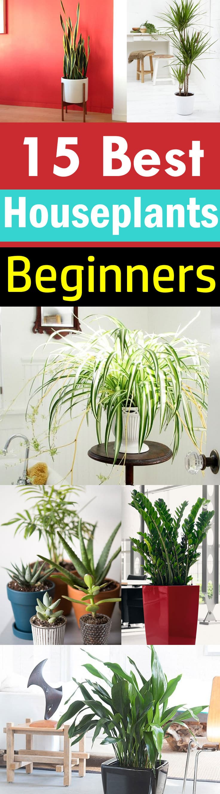 new to growing plants and no idea what you should grow indoors learn about these