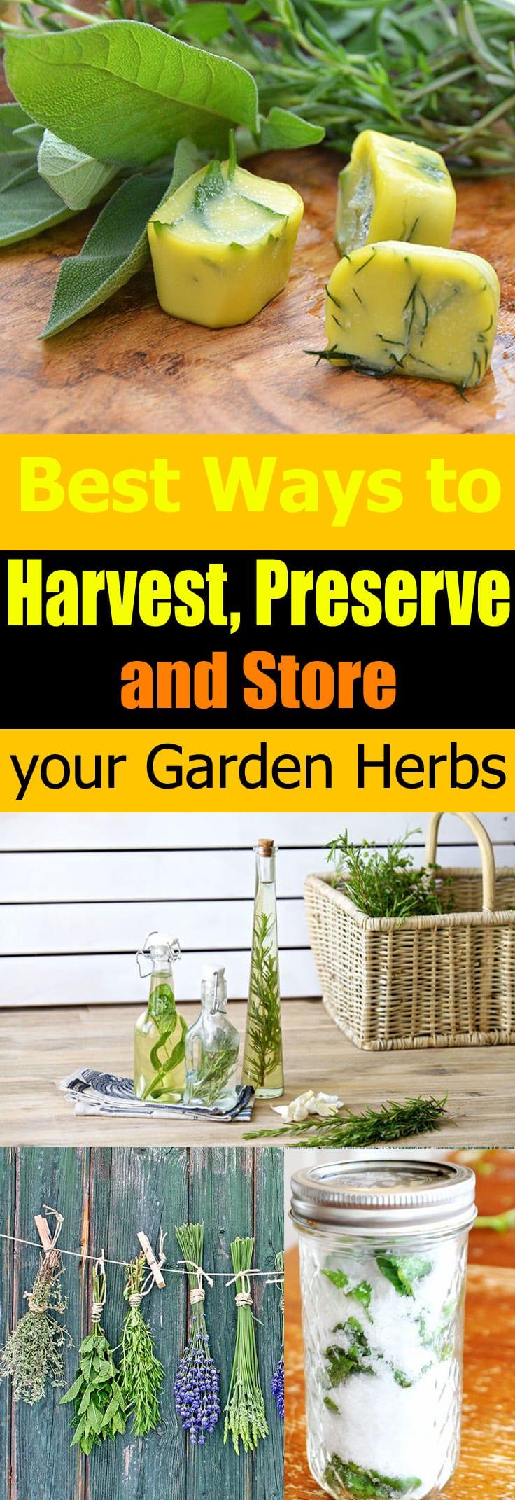 best ways to harvest preserve store your garden herbs balcony garden web. Black Bedroom Furniture Sets. Home Design Ideas