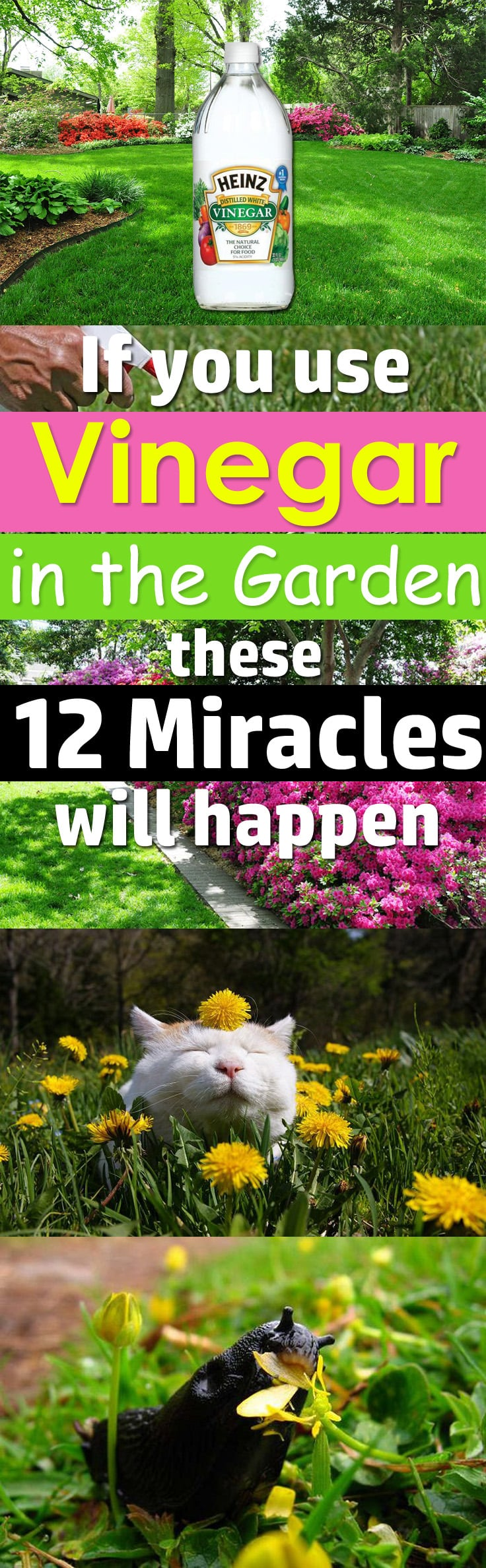 Vinegar Has Myriads Of Uses In The Kitchen But It Can Also Do Miracles In  The