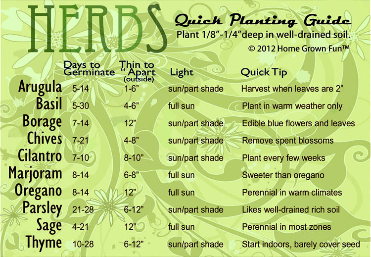 Indoor Herb Garden Infographics (4)