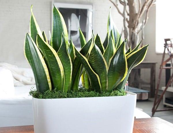15 best houseplants for beginners balcony garden web for Low maintenance potted plants indoor