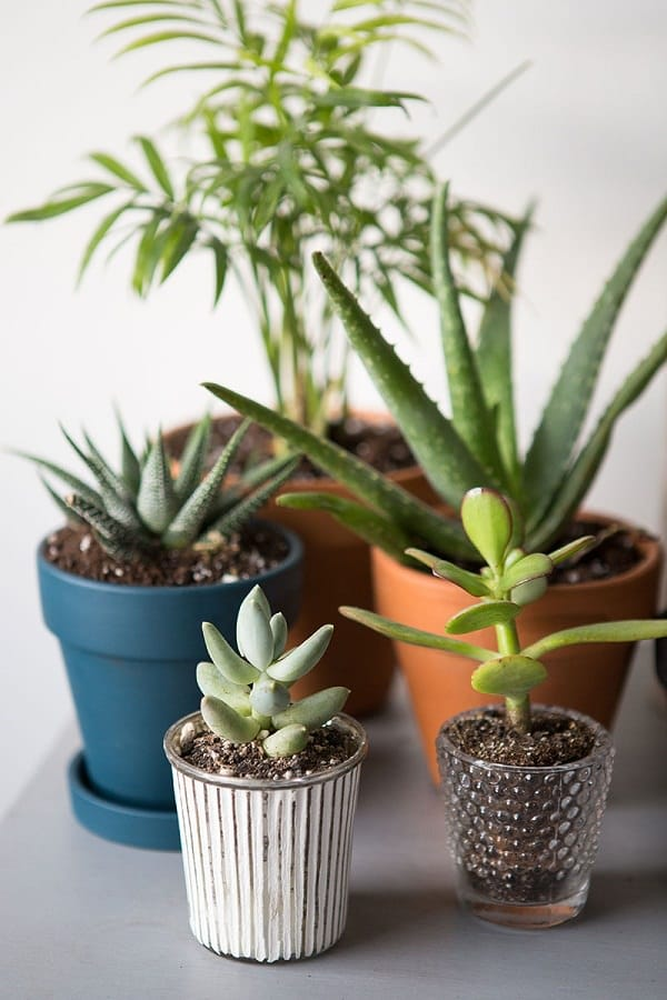 15 best houseplants for beginners balcony garden web for Easy to take care of indoor plants
