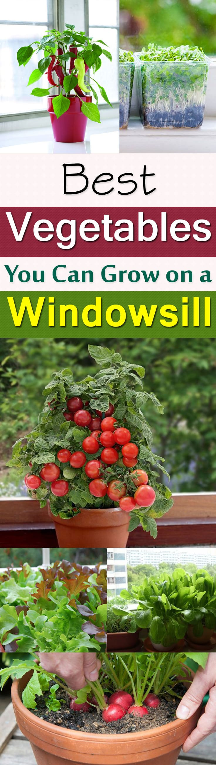 windowsill vegetable gardening 11 best vegetables to grow on
