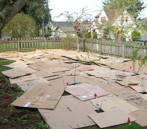 Diy Pvc Gardening Ideas And Projects: DIY Cardboard Projects & Ideas For Garden