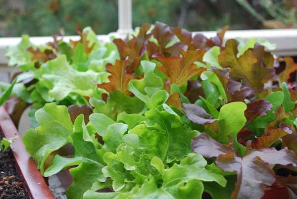 Jardinería Windowsill: Cómo mantener un poco verde dentro - Autoridad Orgánica