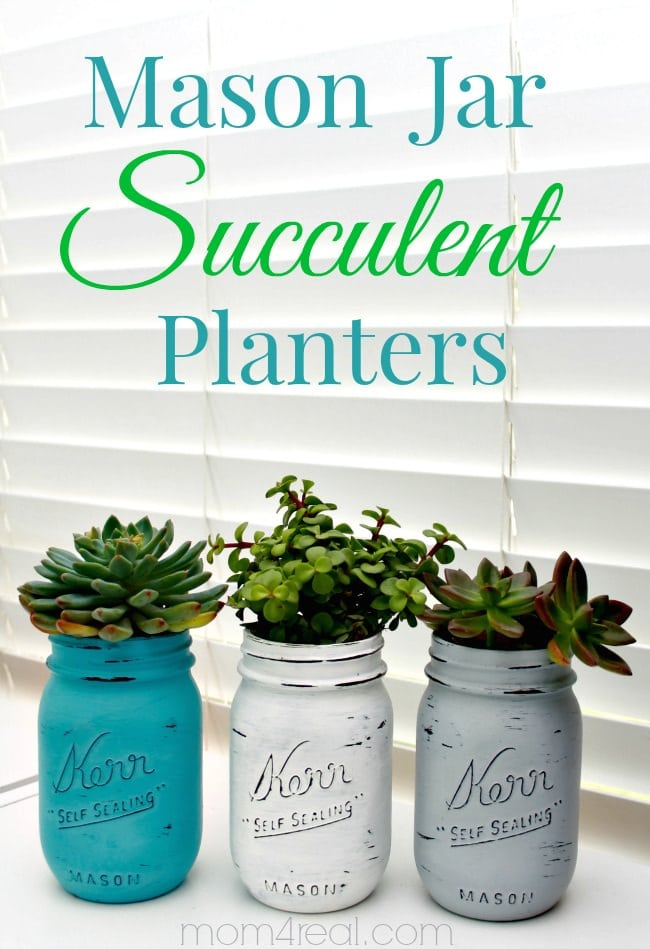 15 Best Indoor Succulent Planting Ideas That Can Beautify Your Home Balcony Garden Web