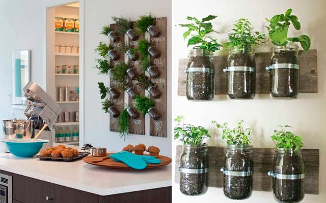 Don T Throw Away Those Old Mason Jars Use Them Creatively To Make An Indoor Herb Wall Garden Metal Bands And S Hold The In Place Against A