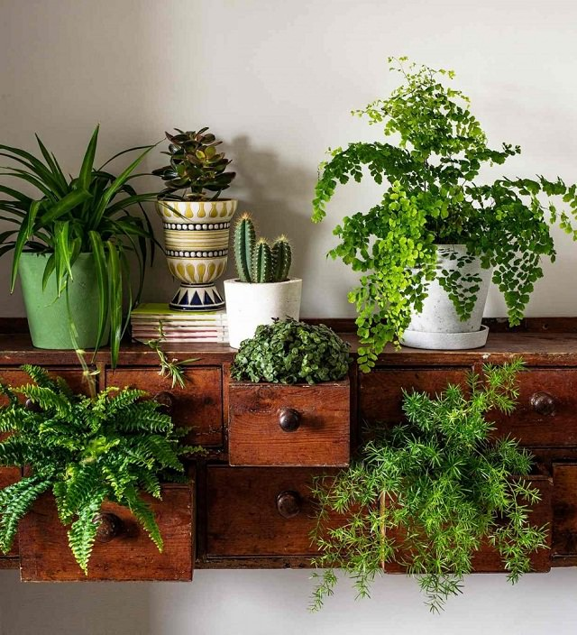 Vertical Indoor Garden 15 brilliant diy vertical indoor garden ideas to help you create use an old dresser to create a stunning indoor garden plant some ferns and succulents in its drawers and also place some on top to create a beautiful workwithnaturefo
