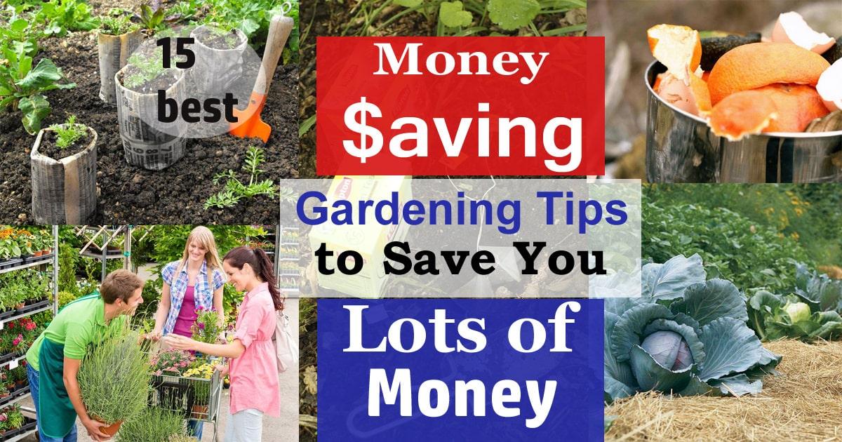 15 Money Saving Gardening Tips Ways To Save Money In Garden Balcony Garden Web