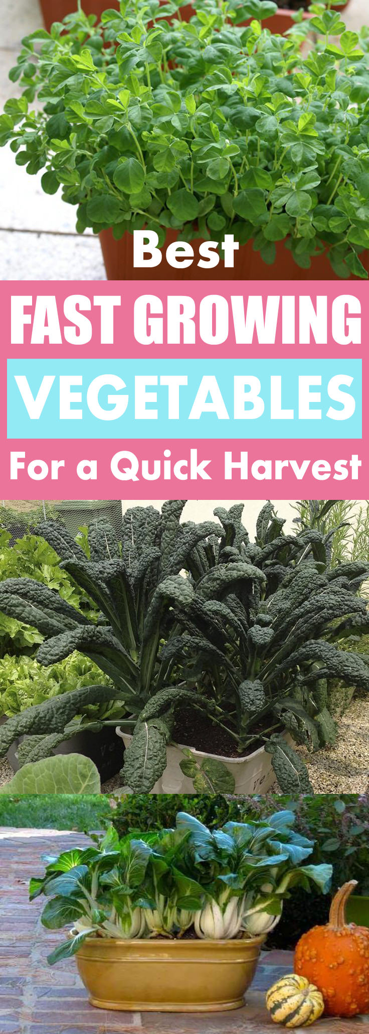 fast growing vegetables for quick harvest can be grown in