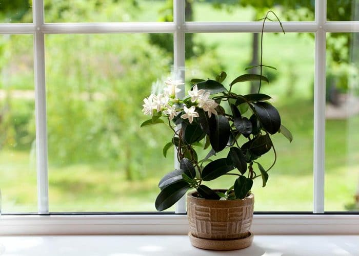 pictures of house plants vines